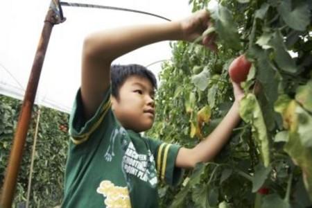 grow-tomato-plants-kids-800x800