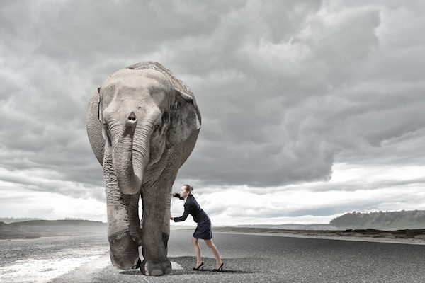 Woman moving elephant