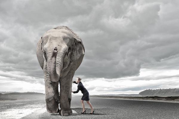 Woman moving elephant