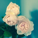 13-instagram-stella-mccartney