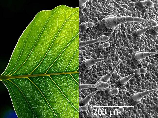 Microscopic photo of tree leaves