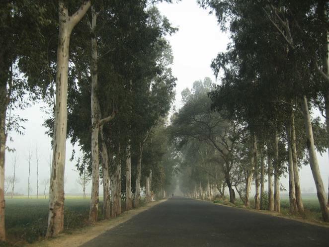 India plantng 2 Billion Trees