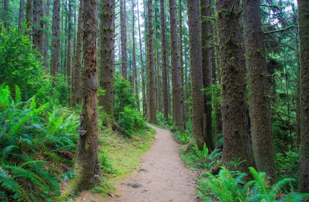 State Parks Free On Blakc Friday in California and Minnesota