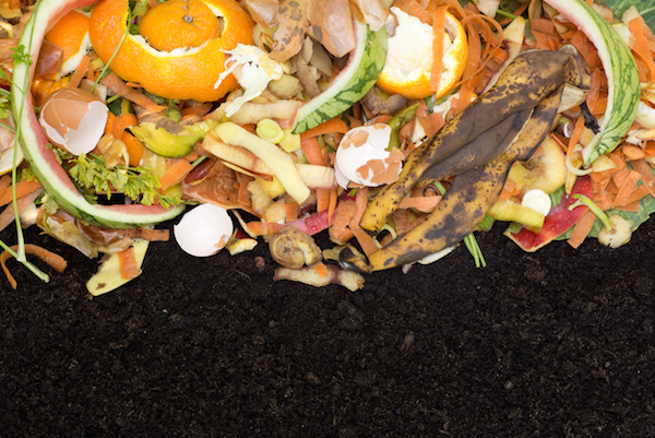 Food Waste Becomes Compost