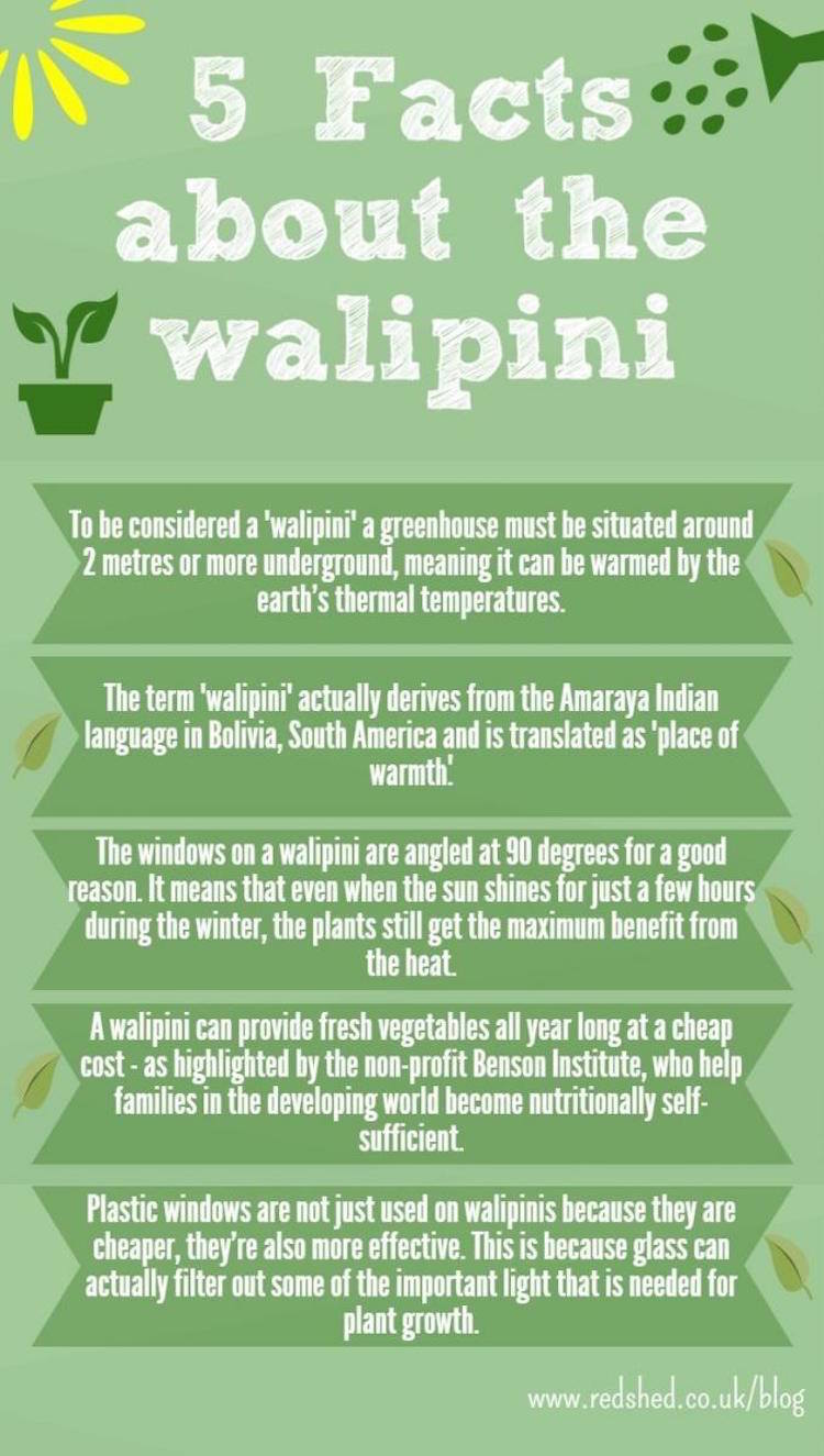 Walipini Infographic - 5 Things You Should Know About Underground Greenhouses