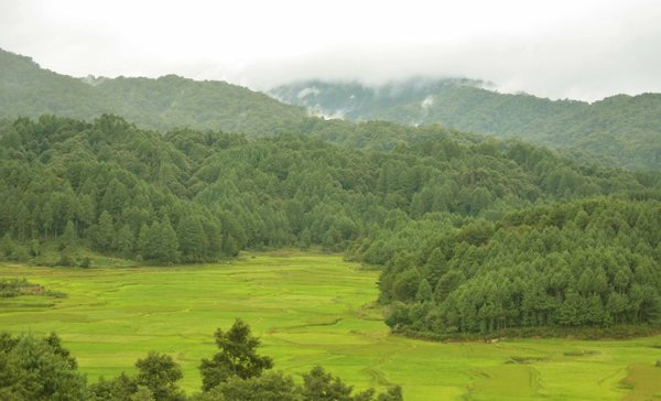rice fields ziro valley women of green