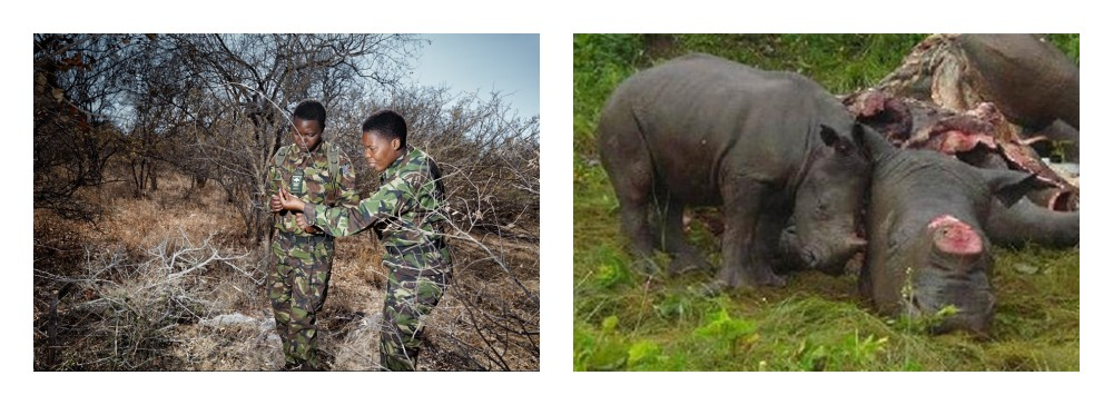 black-mamba-group-rhino-women-of-green