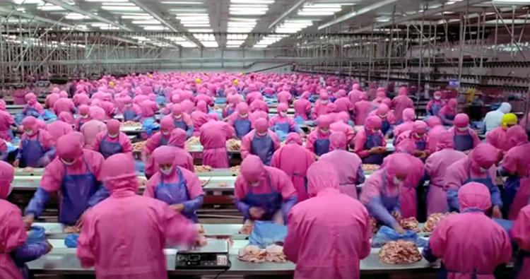 meat packing plan-women-of-green
