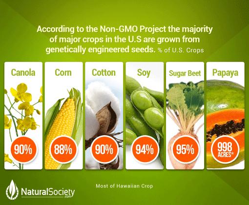 gmo-crops-women-of-green