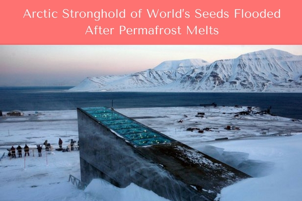 Svalbard Global Seed Vault is Flooded_Women of Gree