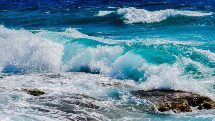 ocean sustainability artificial intelligence_women of green