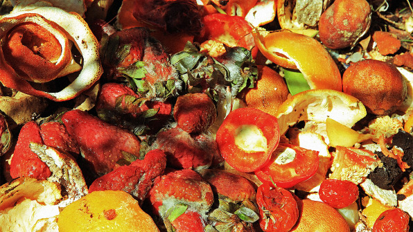 reducing-food-waste-is-good-business-rotting-produce-women-of-green