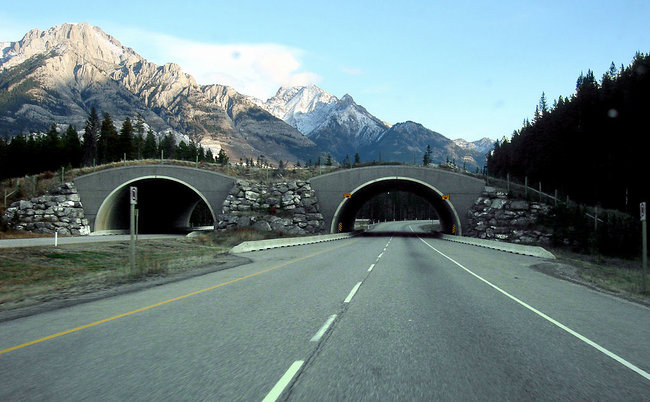 trans-canada-wildlife_overpass_women_of_green